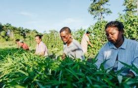 Timor-Leste Oxfam kate bensen