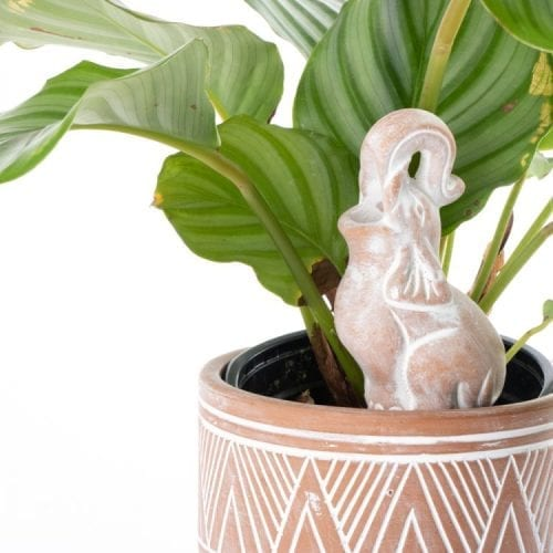 Oxfam Shop New Zealand Elephant Pot Water Dripper