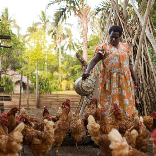 pair-of-chickens-oxfam-nz