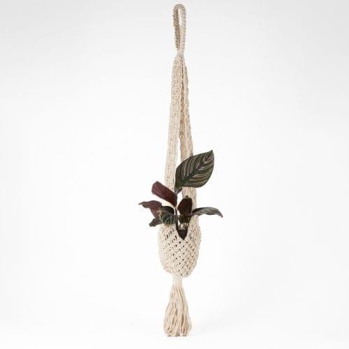 Oxfam shop Cotton macrame hanging planter
