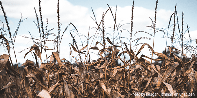 Growing Hunger with the Climate Crisis and the Pandemic in the Central American Dry Corridor