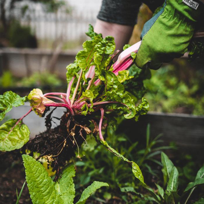 Help farmers feed a climate-friendly future